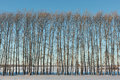 Bare trees in winter Royalty Free Stock Photo