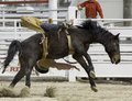 Bareback riding cowboy being bucked off Royalty Free Stock Photography