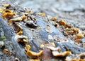 Barely surviving mushrooms