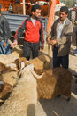 Bargaining for a sheep for the sacrifice of Eid al Royalty Free Stock Photos