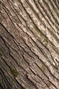 Bark Royalty Free Stock Photography
