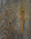 Bark aged wood texture with tree ring use as natural background Royalty Free Stock Photo