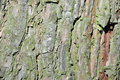 Bark background Royalty Free Stock Photos