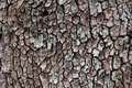 The bark close up of a Royalty Free Stock Photography