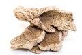 Bark cork oak tree dry Royalty Free Stock Photo