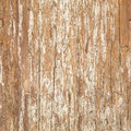 Bark of Elm. Seamless Tileable Texture Royalty Free Stock Photo
