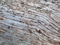 Natural texture of tree trunk, external surface of dead pine. Royalty Free Stock Photo