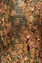 Bark of gumbo-limbo tree Royalty Free Stock Photo