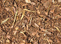 Bark mulch Royalty Free Stock Images