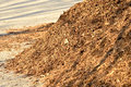 Bark mulch Royalty Free Stock Photo