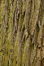 Bark of the old Royalty Free Stock Photo