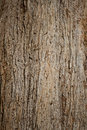 Bark of old pine tree close up Stock Images