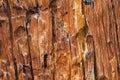 Bark Pine Beetle damage Royalty Free Stock Photo
