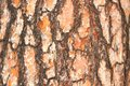 The bark of pine 2 Royalty Free Stock Photo