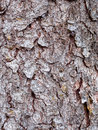 Bark texture close up background Royalty Free Stock Images