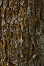 Bark texture palm tree wood closeup with natural color tones Royalty Free Stock Photos