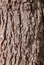 Bark texture skin of wood texture background nature detail Royalty Free Stock Photos