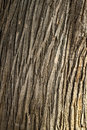 Bark texture tree wood closeup with cracks and natural color tone Royalty Free Stock Photo