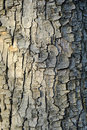 Bark texture tree wood closeup with cracks and red skin wood color tone Stock Image