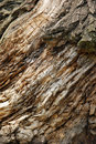 Bark of the tree Stock Photos