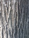 The bark of a tree close up texture Royalty Free Stock Images