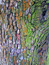 Bark of tree outdoors photography texture Stock Images