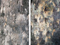 Bark tree set of two texture Royalty Free Stock Photography