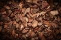 Bark tree texture Royalty Free Stock Photo