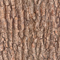 Bark tree texture Royalty Free Stock Photo
