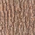 Bark tree texture a seamless Royalty Free Stock Image