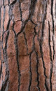 Bark tree textured
