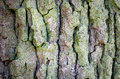 Bark of tree trunk