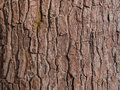The bark of the wood