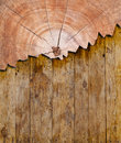 Bark wood pattern for background or backdrop Stock Image