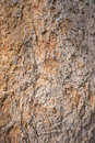 Bark wood texture background in natural Royalty Free Stock Photography