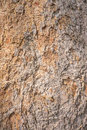 Bark wood texture background in natural Stock Images