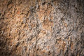 Bark wood texture background in natural Stock Image