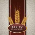 Barley design concept and wheat vector illustration Stock Image