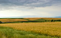 Barley field landscape composed of a in the foreground Royalty Free Stock Photography