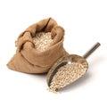 Barley grain Royalty Free Stock Photo