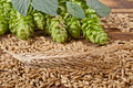 Barley with hop cones Stock Photography