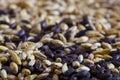 Barley malt Stock Image