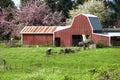 Barn and calf grazing. Stock Photo