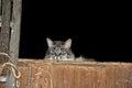 Barn cat in hay loft