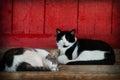 Barn cats napping Royalty Free Stock Photo