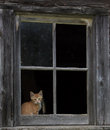 Barn kitten framed in the old window Royalty Free Stock Photos