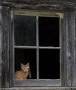 Barn kitten framed