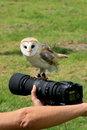Barn owl upon a camera Royalty Free Stock Photo