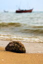Barnacle and sea on the beach in thailand Royalty Free Stock Image