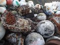 Barnacles by the shore ball and car parts tossed to wayside formed over parts used for anchors Stock Photo